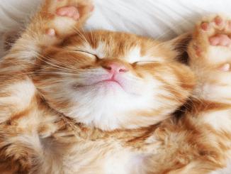 Bild einer Katze